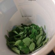 How to store the moringa leaves